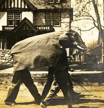 Men in Elephant Costume